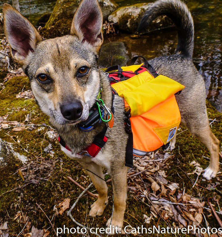 Groundbird Gear Covey members, users of GBG custom made dog gear. Cath and Sojo, A.T. long distance hikers 2015