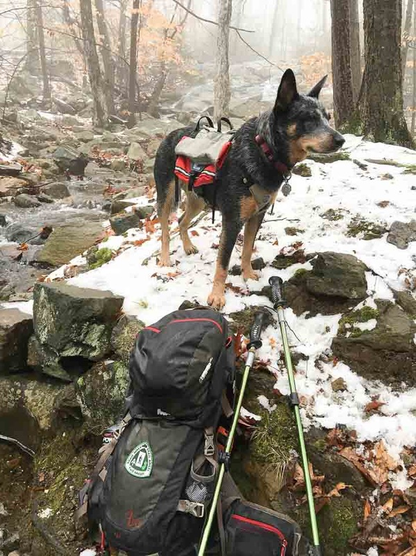 Emma Happy Trail Dog wearing small size Groundbird Trekking Pack in Harriman State Park, NY. Backpacking with dogs. Lightweight gear for trail dogs.