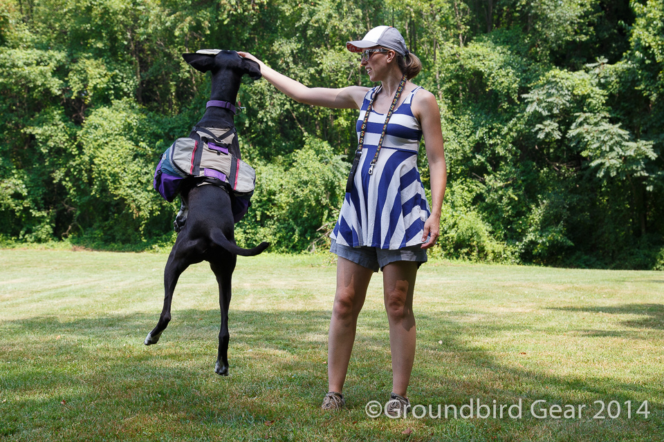 Groundbird Gear-- made in America dog packs-- custom built, lightweight, durable, for the comfort of your trail dog no matter how long the hike!