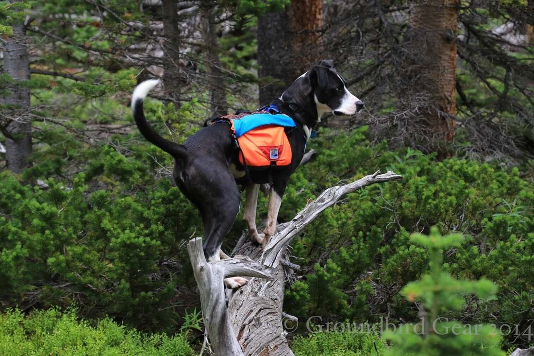 Hiking and backpacking with dogs. Groundbird Gear's hiking blog. Lightweight, custom made in America dog packs.