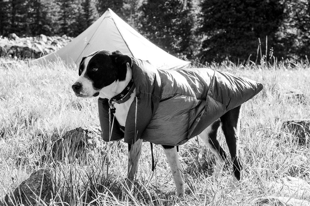 Cooper at bedtime in our Tarptent Stratospire, wearing his new Groundbird Gear Turtle Topquilt. The ultralight dog sleep solution weighing on average 8oz for up to freezing temperatures. Filled with premium 800fp down